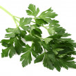 Parsley slice - Stock Photo