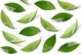 Collage van bladeren — Stockfoto