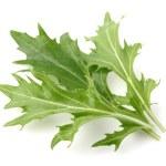 Arugula plants — Stock Photo