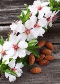 Almonds flowers — Stock Photo