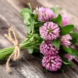 Red clover — Stock Photo #25633895