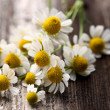 Chamomile on a wooden background — Stock Photo