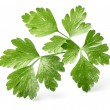 Parsley leaves — Stock Photo