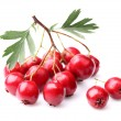 Berry of hawthorn — Stock Photo #30135049
