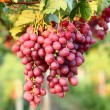 Grapes with leaves — Stock Photo #30282467