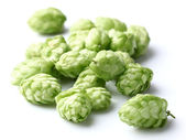 Heap of hop — Stock Photo