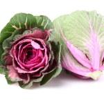 Cabbage — Stock Photo