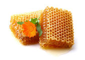 Honeycomb with marigold — Stock Photo