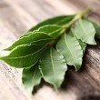 Laurel leaves — Stock Photo