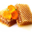 Stock Photo: Honeycombs with calendula