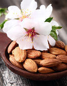 Almonds kernels with flowers — Stock Photo