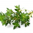 Stock Photo: Thyme spice