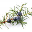 Juniper berry — Stock Photo #40631379