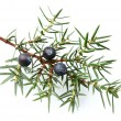 Juniper twig with berries — Stock fotografie #40945797