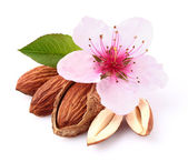 Almonds kernel with flower — Stock Photo