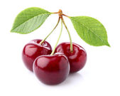 Cherry in closeup — Foto Stock