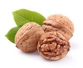 Dried walnuts in closeup — Stock Photo