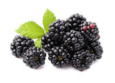 Blackberry with leaves — Stock Photo