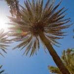 Palm trees over blue sky — Stock Photo #28259647