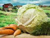 Carrots and cabbage on the background of rural areas — Stock Photo