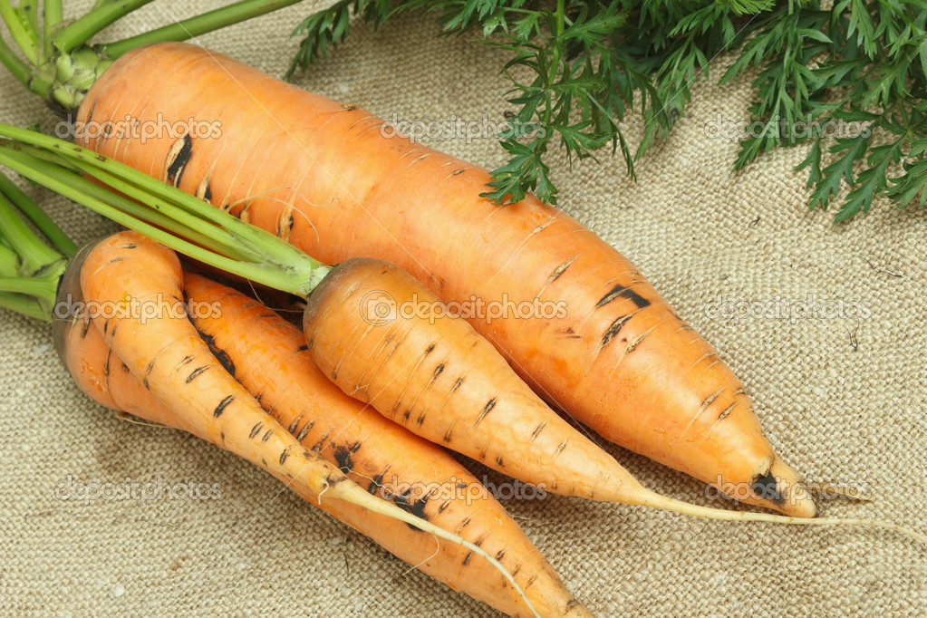 Carrots with tops on sacking — Stock Photo #12555652