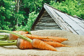 Carrots on the background of rural areas — Stock Photo