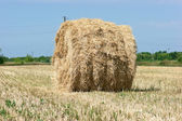 Stacks of straw on sloping wheat field — Stock Photo