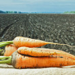 Carrots on the background of agricultural lands — Stock Photo