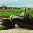 Stock Photo: Eggplant on background of rural areas