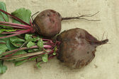 Beets with tops on sacking — Stock Photo