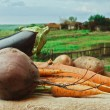 Stock Photo: Vegetables on background of rural areas