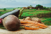 Vegetables on the background of rural areas — Stock Photo