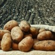 Potatoes on the background of agricultural lands — Stock Photo
