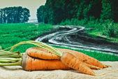 Wortelen op de achtergrond van landbouwgronden — Stockfoto