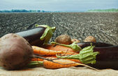 Vegetables on the background of agricultural lands — Stock Photo