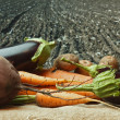 Stock Photo: Vegetables on the background of agricultural lands