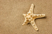 Starfish on a sandy beach — Stock Photo