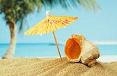 Mušle na písečné pláži na pobřeží tropických — Stock fotografie