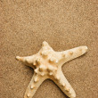 Starfish on a sandy beach - Stock Photo