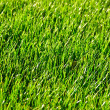 Fresh green grass Turf background - Stock Photo