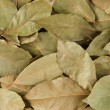 Dry bay leaves, background — Stock Photo #16247989