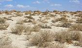 Arabian desert at noon — Stock Photo