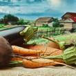 Stock Photo: Vegetables on the background of rural areas
