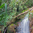 Royalty-Free Stock Photo: Waterfall in the tropical jungles