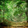 Stock Photo: Tropical jungles