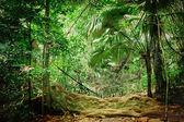 Selvas tropicais — Fotografia Stock
