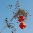 Two red lanterns in a tree - Stock Photo