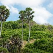 Tropical landscape in Phuket Thailand - Foto Stock