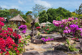 Garden on the hill of the island of Phi Phi — Stock Photo
