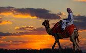 贝都因人骑骆驼在沙漠里和 horizo 的现代化城市 — 图库照片